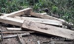 Vụ phá rừng ở Kon Plông: Tại hiện trường có 101 hộp gỗ