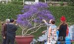 Chiêm ngưỡng những đoá hoa khổng lồ trên mặt hồ Xuân Hương