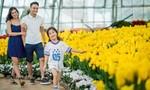 Đồi Vạn Hoa: Địa điểm du xuân lý tưởng dành cho các gia đình