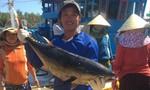 Cảng cá miền Trung nhộn nhịp như ngày hội
