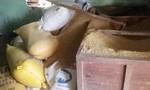 Người dân trình báo bị mất 50 cây vàng giấu dưới đống lúa