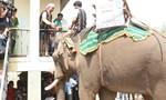 Độc đáo lễ cúng bến nước và lễ cúng sức khỏe cho voi