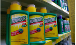 Bồi thẩm đoàn Mỹ tuyên thuốc diệt cỏ Roundup gây ung thư