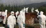 Công dân Việt Nam mang thịt heo vào Đài Loan có thể bị phạt 33.000 USD