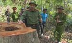 Giám đốc Công an tỉnh đến hiện trường chỉ đạo điều tra vụ phá rừng