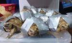 Phát hiện 1.529 con rùa quý hiếm trong hai vali tại sân bay