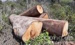 """Mở đường qua nghĩa địa để """"diệt"""" rừng"""