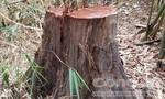 """Vụ phá rừng gần 2 trạm bảo vệ rừng: Từng thay thế chủ tịch xã vì quá """"nóng"""""""