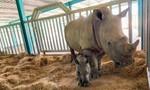 Vinpearl Safari Phú Quốc  đón 2 cá thể tê giác quý chào đời
