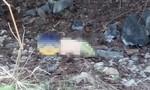 Theo chú chó dẫn đường, tìm thấy thi thể bé trai 2 tuổi mất tích
