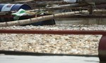 1.000 tấn cá nuôi lồng bè trên sông La Ngà chết, người dân điêu đứng