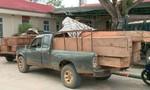 Nổ súng bắt nhóm vận chuyển gỗ lậu do một phụ nữ cầm đầu