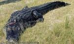 Thi thể người đàn ông trong bụng con cá sấu dài gần 4 m