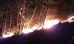 Hơn 100 ha rừng ở Quảng Nam bị thiêu rụi trong một đêm