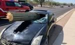 Thoát chết hy hữu khi bị cây xương rồng khổng lồ đâm xuyên ghế lái