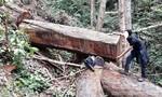 Khởi tố 2 đối tượng phá rừng có tổ chức
