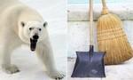 Clip người lao công chống trả gấu Bắc Cực xổng chuồng