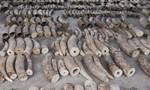 Singapore thu giữ 8,8 tấn ngà voi có điểm đến là Việt Nam