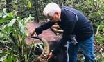 Bò tót gần 1 tấn chết trong Khu bảo tồn thiên nhiên - văn hoá Đồng Nai
