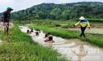 Ba chàng trai ngăn suối, dạy bơi cho trẻ em dưới núi lửa Chư Đăng Ya