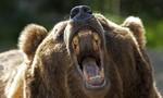 Clip người đàn ông thoát chết thần kỳ sau khi chơi dại chọc gấu dữ