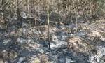 Thiếu niên gây ra 3 vụ đốt rừng để trả thù và… cho vui