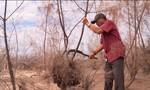 Rừng phòng hộ chống biến đổi khí hậu chết hàng loạt do nắng hạn