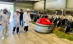 Hạt nhân để xây dựng vùng chăn nuôi bò sữa an toàn dịch bệnh