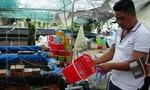 Phát hiện 7.500 con tôm càng đỏ, sinh vật ngoại lai nguy hại