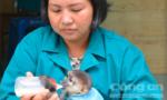 Voọc chân xám sinh sản thành công trong môi trường nuôi nhốt