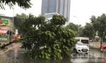 Hà Nội mưa trắng trời, nhiều cây đổ chắn ngang đường