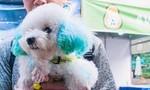 Nhiều người thích thú với lễ hội cún cưng ở Sài Gòn