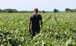 Đài Loan chi gần 4 tỷ USD mua nông sản Mỹ