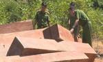 Vụ phá rừng quy mô lớn ở Đắk Lắk: Thu thêm trên 500m3 gỗ