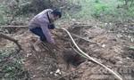 Gia Lai chỉ đạo ngăn chặn việc đào bới tìm gỗ sưa