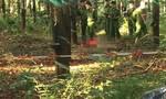 Phát hiện thi thể cô gái không mặc quần áo trong rừng cao su