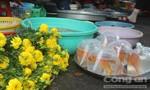 Cá chép hồng ngập chợ ngày 23 tháng Chạp