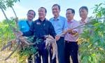 Tập đoàn Sao Mai với mô hình liên kết vùng nguyên liệu bền vững