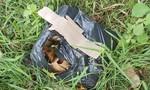 Cứu bé trai sơ sinh còn sống bỏ trong túi ni lông vứt ven đường