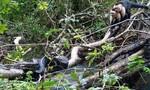 Clip đàn khỉ hợp sức cứu con non khỏi trăn khủng
