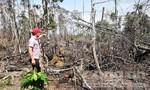 Điều tra vụ phá hơn 8.000m2 diện tích rừng