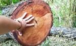 Vụ phá rừng gần chốt bảo vệ: Tỉnh Gia Lai chỉ đạo kiểm tra