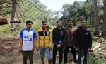 Xác định 6 đối tượng triệt hạ rừng phòng hộ ở Lạc Dương, Lâm Đồng