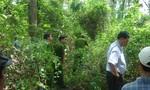 Tội ác giữa cánh rừng