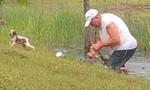 Clip cụ ông cạy hàm cá sấu để cứu chó cưng