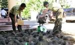 Báo động nạn buôn bán động vật hoang dã
