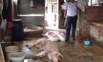 Đồng Nai: Phát hiện 2 cơ sở giết mổ heo nghi mắc bệnh, heo chết bán ra thị trường
