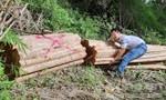 Bắt xe chở lượng lớn gỗ lậu ở biên giới