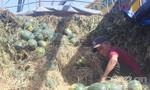 Giải cứu dưa hấu: 5 ngàn đồng/kg, ship tận nơi