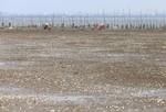 Ngao chết trắng biển ở Hà Tĩnh, dân thiệt hại tiền tỷ